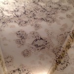 mold in your home cumming ga