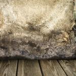 mold in your house Jasper GA